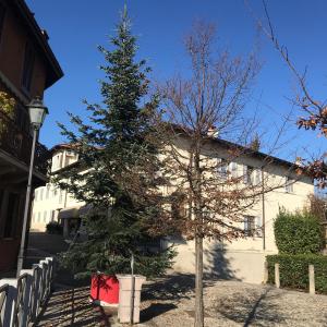 E' arrivato l'Albero del Natale di Montevecchia